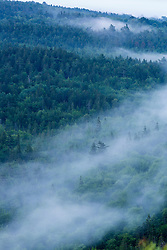 Fog in the forest in Maine's Acadia National Park.