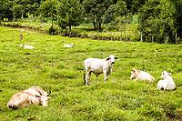 Criação de gado no Distrito de Dom Carlos. Passos Maia, Santa Catarina, Brasil. / <br /> Cattle at Dom Carlos district. Passos Maia, Santa Catarina, Brazil.