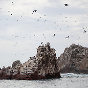Ballestas Islands, Paracas, Peru.