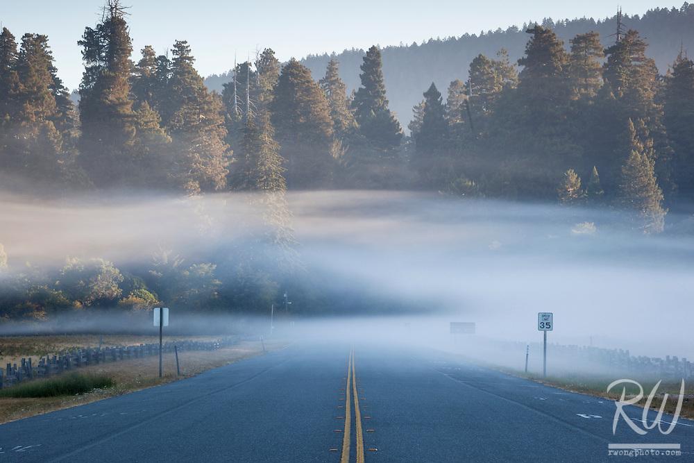 Newton B. Drury Parkway Morning Fog, Prairie Creek Redwoods State Park, California