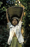 Balinese girl carries basket of harvested rice on her head, Ubud, Bali, Indonesia