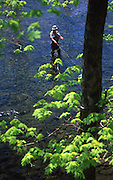 Fly Fishing, game forest, North central PA, Potter County