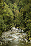 Beech forest surrounds the Clinton River in Fiordland National Park.