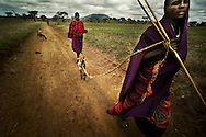 Tanzania, traditional Maasai life. Livestock is still the common currency and is exchanged to settle disputes and as general gifts.