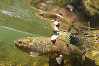 Mike Weir fly fishing near Lake Tahoe, CA
