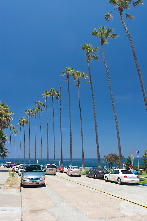 A beachside street with a row of tall palms in central La Jolla, California.