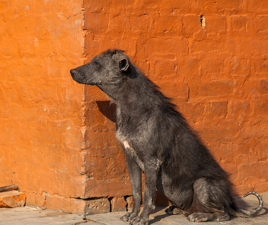 A temple dog at Syayambhunath Stupa in Kathmandu keeps a watchful eye on her pups.