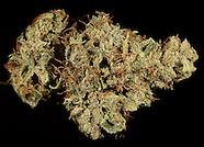 Dried Cannabis Flowers