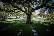 Los Angeles, April 9 2012-  Westwood Village Memorial Park Cemetery.