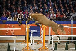 270 - Gangster<br /> KWPN Stallion Selection - 's Hertogenbosch 2014<br /> © Dirk Caremans