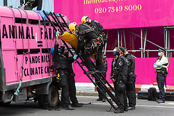© Licensed to London News Pictures. 03/09/2020. London, UK. Specialist police officers free an Animal Rebellion protester who has fixed themselves to an abandoned  pink truck outside the Department of health in Victoria St. Photo credit: Ray Tang/LNP