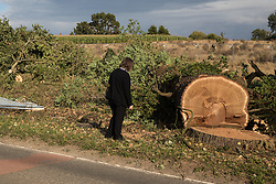 Offchurch, UK. 24th August, 2020. A local resident and anti-HS2 activist examines a mature oak tree felled alongside the Fosse Way as part of works in connection with the HS2 high-speed rail link. Environmental activists based at wildlife protection camps in Warwickshire have been trying to prevent or delay the felling of large numbers of trees in connection with the £106bn HS2 high-speed rail link, which will destroy or significantly impact many irreplaceable natural habitats including 108 ancient woodlands.