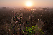 The rising sun highlights morning mist and spider webs on the sawgrass plains of the Everglades