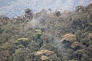 Cloud forest; Tapichalaca Reserve; Ecuador, Zamora Chinchipe