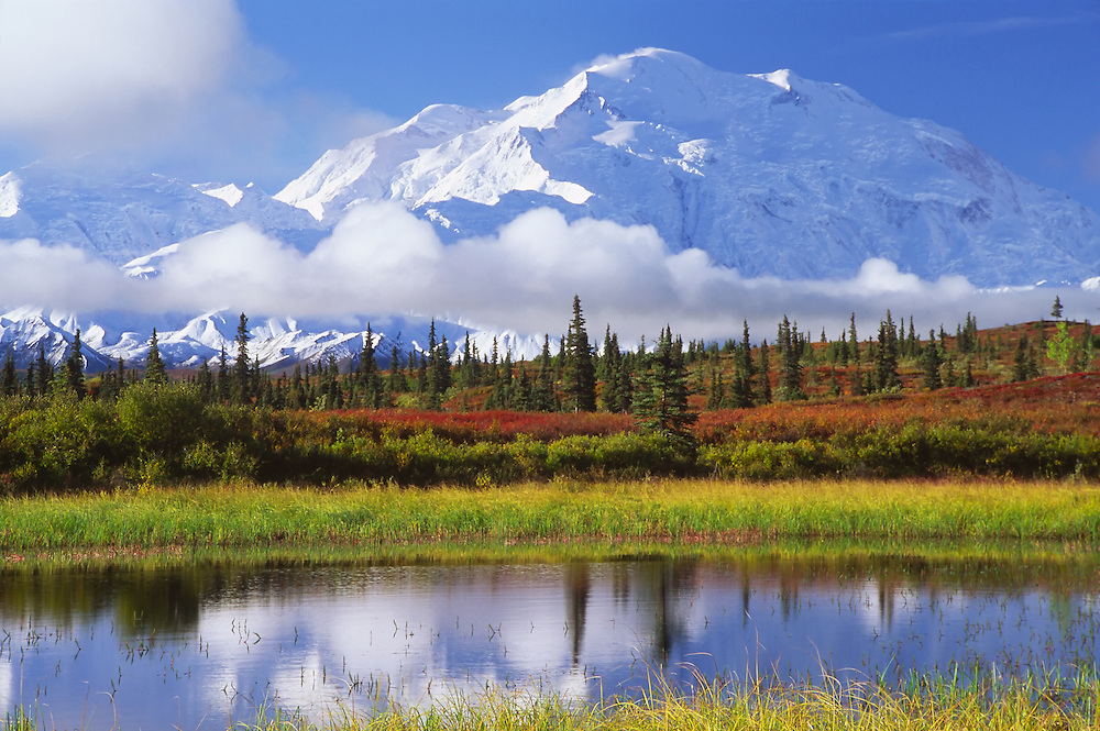 Fall colors of the tundra and a reflective pond highlight Mt. McKinley or Denali in full view in Denali National Park, Alaska. Fall. Morning.