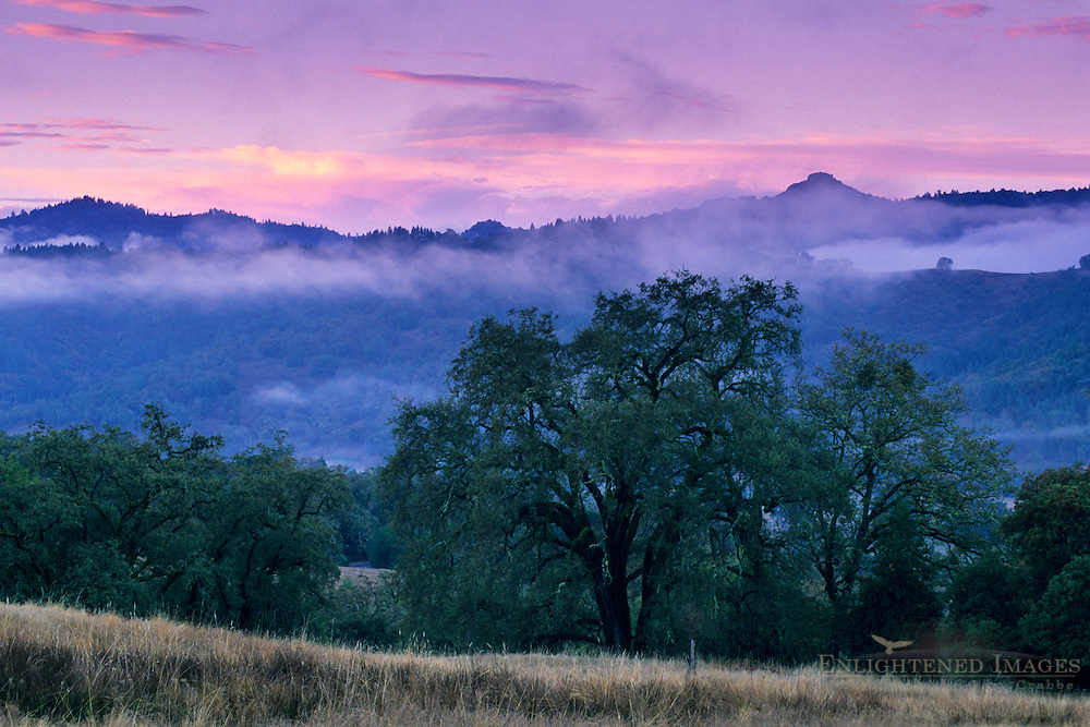 Fog at dawn over hills and oak trees, near Willits, Mendocino County, California
