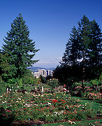 Image of the International Rose Test Garden in Portland, Oregon, Pacific Northwest
