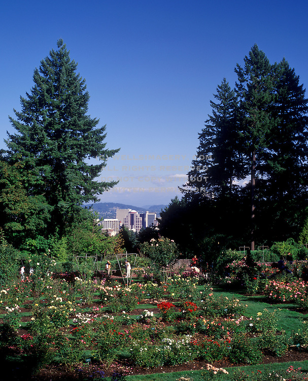 Image of the International Rose Test Garden in Portland, Oregon, Pacific Northwest