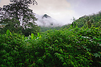 Jungle, rainforest,  Kanchanaburi Province, Thailand
