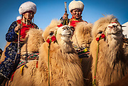 Bactrian camel,  Grand Parade, ' festival of a thousand camels' Bulgan, winter in Gobi desert, Mongolia