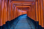 Senbon Torii, Fushimi Inari, Fushimi, Kyoto, Japan.