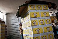 Taybeh Beer, Taybeh, Palestine. 2012.