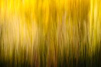 Autumn trees abstract; Utah