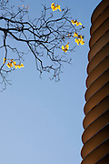 Belo Horizonte_MG, Brasil...Arvore florida proxima ao edificio Niemeyer na Praca da Liberdade...The flower tree next to the Niemeyer building in Liberdade Square...Foto: BRUNO MAGALHAES / NITRO