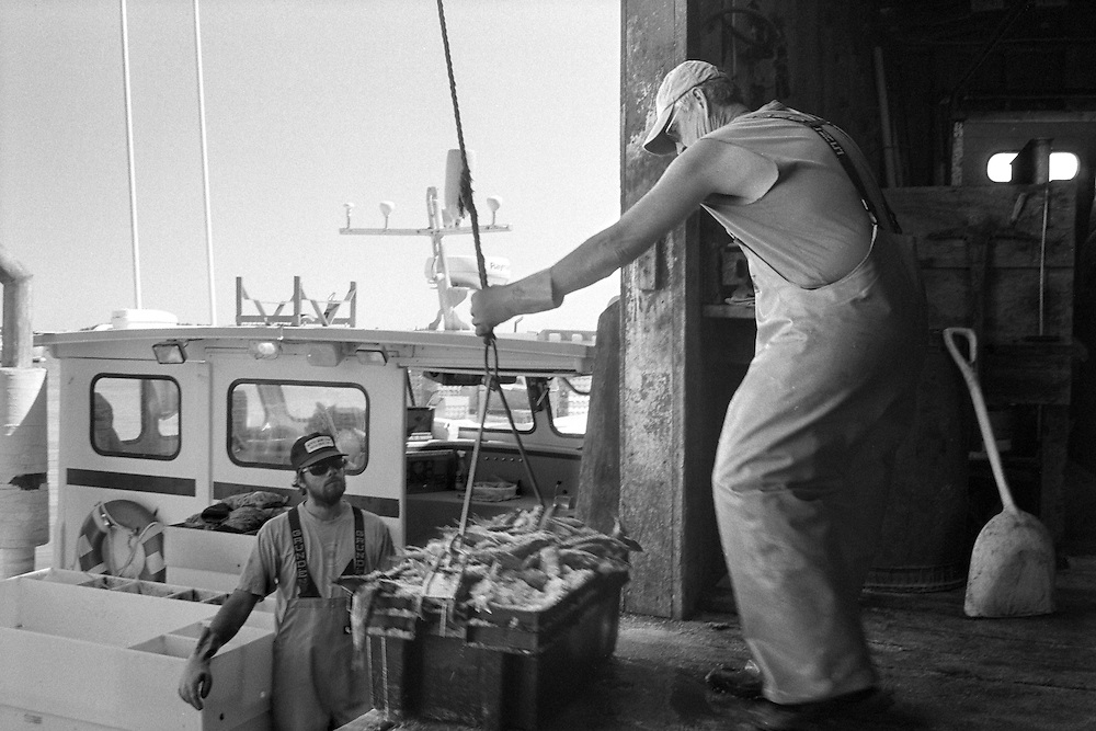 After selling the lobsters from the day's catch, Benny Robbins and his sternman load bait from a shop into his boat for the next day.