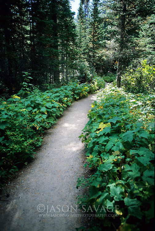 Trail in Glacier National Park