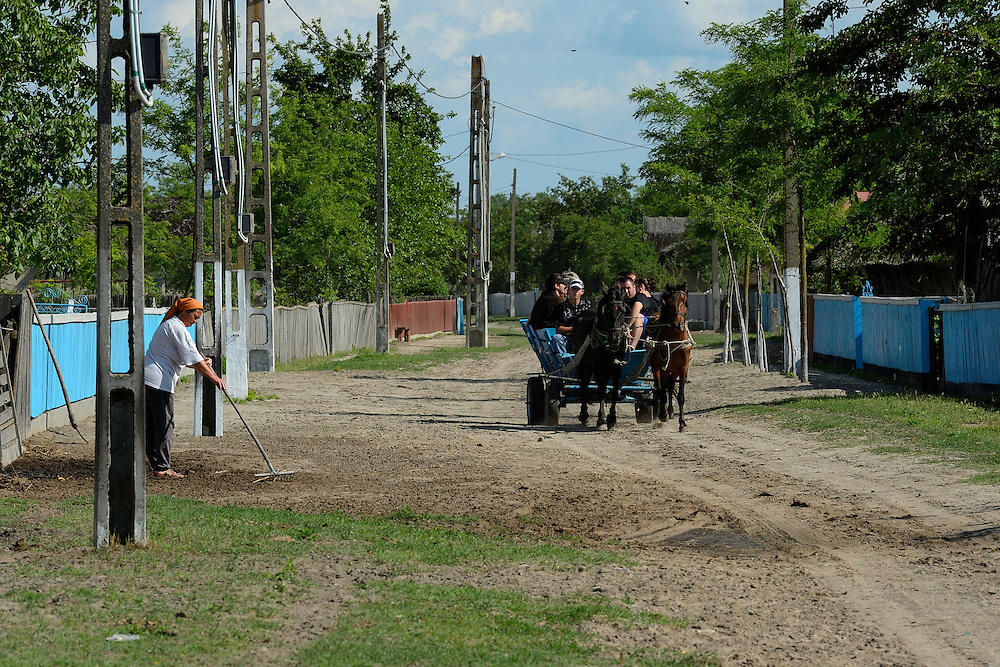 Tourism in the delta, horse wagon trip, Letea, Danube delta rewilding area, Romania