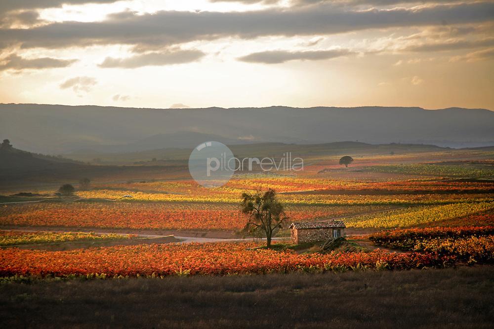 Otoño en el valle de Cardenas. La Rioja ©Daniel Acevedo / PILAR REVILLA