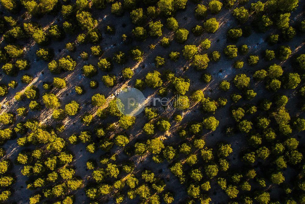 Pinada (Pinus halepensis) Alpera. Albacete. Fotografía aérea con drone. ©AntonioReal Hurtado / PILAR REVILLA