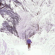 Rockland Color A woman cross Country skiing through a snow covered forest