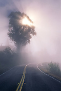 Fog and sunbeam through tree along the Panoramic Highway, Mount Tamalpais, Marin County, California