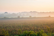 View across misty fields at sunrise