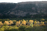 Cottonwoods line the portion of the Red River running through Palo Duro Canyon.