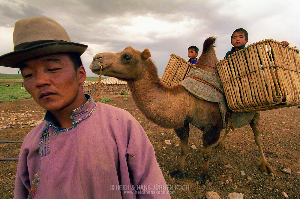 Mongolei, MNG, 2003: Kamel (Camelus bactrianus). Transport von Kindern auf dem Rücken eines Kamels. Die Kinder sitzen in großen Transportkörben. Der Vater eines der Kinder geht vorneweg. Sie sind auf dem Weg in ihr Winterlager, Süd-Gobi.   Mongolia, MNG, 2003: Camel, Camelus bactrianus, transport of children on the back of a camel, children sitting in big transport baskets, father of one child is walking ahead on his way to the winter camp, South Gobi.  