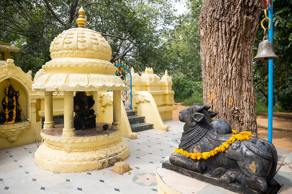THIMMAMMA MARRIMANU, INDIA - 25th October 2019 - Statue of Nandi (Nandin) the gate-guardian / gatekeeper deity of an abode for Lord Shiva, Thimmamma Marrimanu banyan tree (the world's largest single tree canopy), Andhra Pradesh, India. <br /><br />It is common to find banyan trees in Indian Hindu temple courtyards, but the Thimmamma Marrimanu banyan tree is so large an entire temple sits at the centre of its canopy. A small shrine houses icons of Thimmamma and her husband. The main shrine facing the samadhi houses a black stone icon of Thimmamma. The temple samadhi is believed to be the exact spot where Thimmamma threw herself onto the funeral pyre.