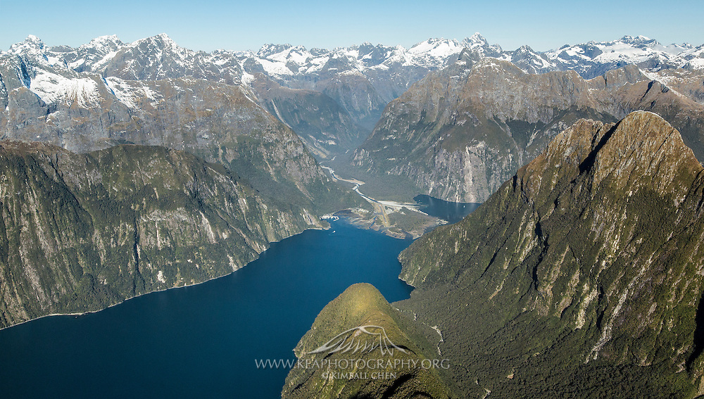 An aerial of lush green trees blanketing the steep rising cliffs in Milford Sound, Fiordland, New Zealand