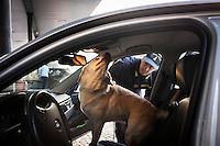 COMO, ITALY - 25 October 2013: A cash dog of Italy's Guardia di Finanza (Financial Police) searches for undeclared cash and focuses his attention on the interior ceiling of the car of a man suspected of smuggling money across the border with Swizerland in Como, Italy, at the border with Chiasso (Switzerland) on October 25th 2013. Cash dogs are sniffer dogs that have specially trained to detect the ink on currency notes. In the effort of cracking down on tax evasion and cash smuggling, the Guardia di Finanza works with highly trained dogs in outposts along its borders with Switzerland and France, and in international airports such as Rome Fiumicino and Milano Malpensa.<br /> <br /> In Italy, the law allows to travel with up to 10,000 euros in cash. Beyond that, one must declare to the authorities.<br /> <br /> In 2012, the Guardia di Finanza of the  borders with Chiasso in Switzerland have intercepted more than 55 million euros not declared. In 2013, until September 31st, they have intercepted more than 92 million euros.  The Guardia di Finanza of the Chiasso outpost has been using cash dogs since 2010.