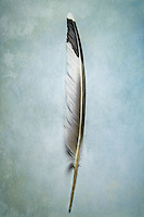 Dove feather, detail on textured background