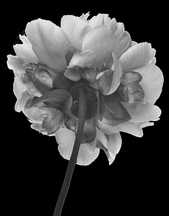 Flowerbacks