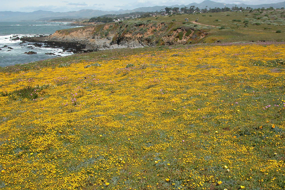 Flower hill, Cambria