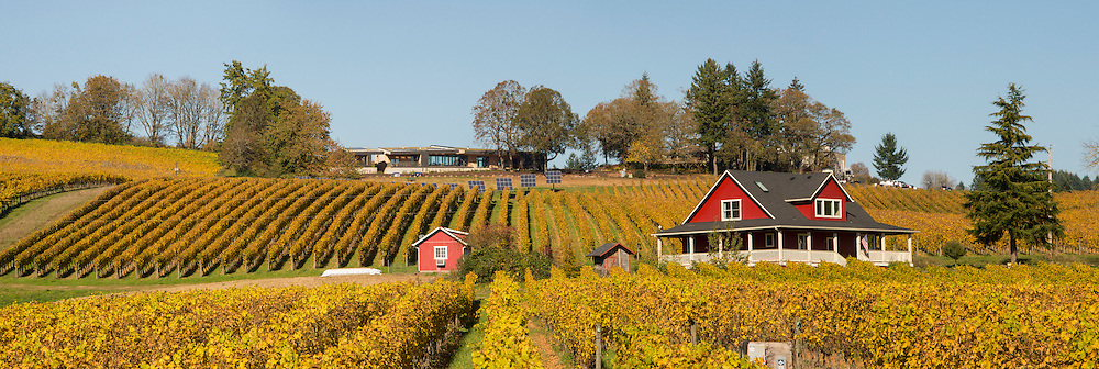 Sokol Blosser's pinot noir vneyards in fall colors, Dundee Hills, Willamette Valley, Oregon