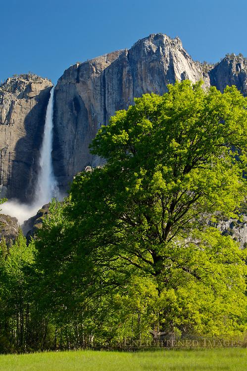 Upper Yosemite Fall in spring, Yosemite Valley, Yosemite National Park, California