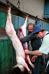 CZECH REPUBLIC VYSOCINA NEDVEZI 10APR09 -  Slaughtered pig is disembowelled and portioned in the backyard of a farm in the village of Nedvezi in the Czech Republic. Slaughtering pigs at home is an old tradition in central and eastern Europe. EU regulations and health and hygiene rules state that animals can only be slaughtered by licensed butchers...jre/Photo by Jiri Rezac..© Jiri Rezac 2009
