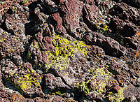 Lichens growing on the volcanic rock at Capulin Volcano.  Capulin National Volcano National Monument, New Mexico.