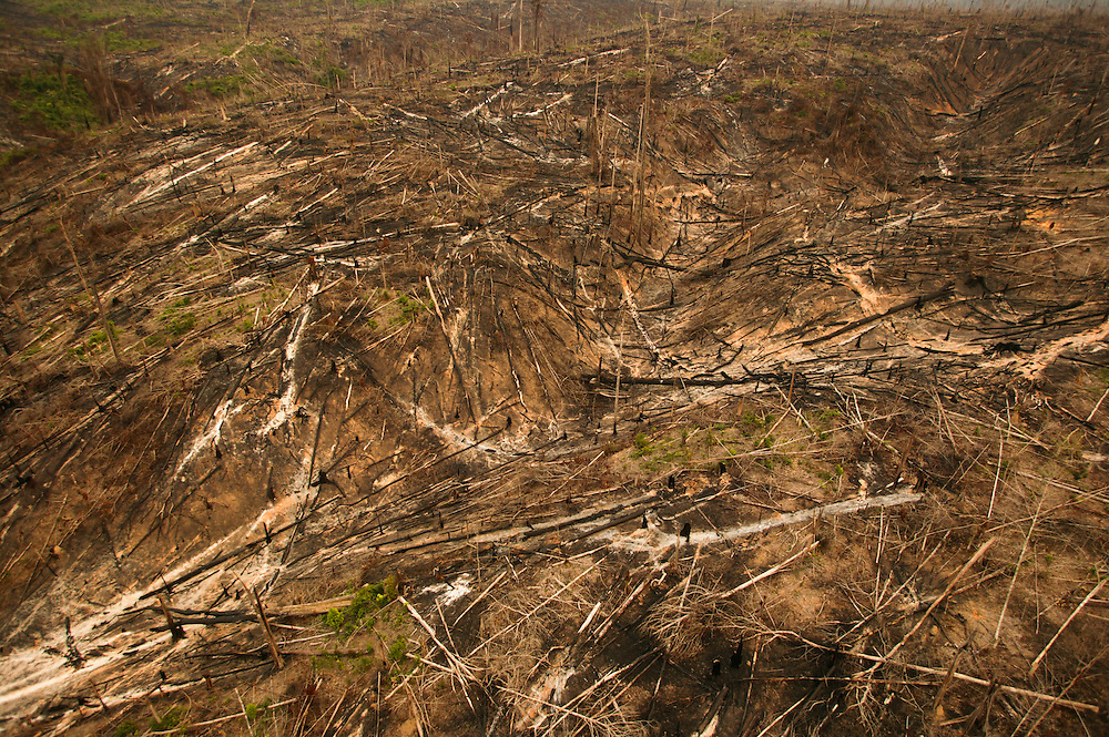 November 28th 2003, Porto de Moz (Para state) Brazil. Deforestated area on public lands in Porto de Moz region. In the previous year there was  a 40% increase in deforestation of Brazil.