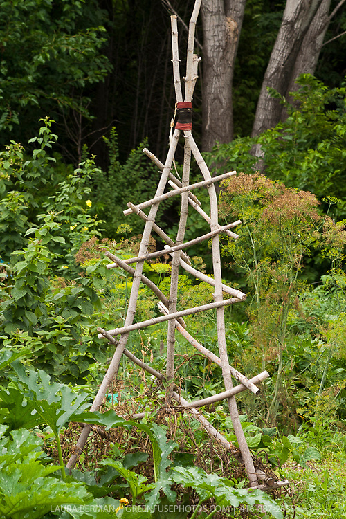 Stout tree branch prunings joined to form a 3 legged titp trellis for squash plants.
